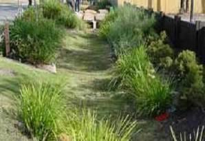 UF/IFAS Okeechobee Extension Service: Florida-Friendly Rain Gardening | A Gathering of Rain Gardens | Scoop.it
