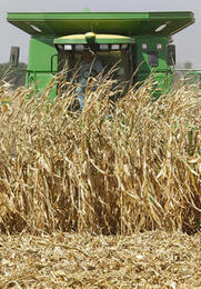 Are biofuels starving the world's poor? - Deseret News | Native American Tribal Energy | Scoop.it