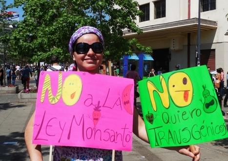 Le Chili célèbre le triomphe contre la Loi Monsanto et l'Accord UPOV... | Abeilles, intoxications et informations | Scoop.it