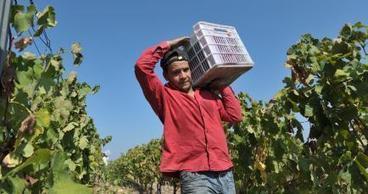Les vins libanais à la conquête de l'Allemagne | Charliban Lebnen | Scoop.it