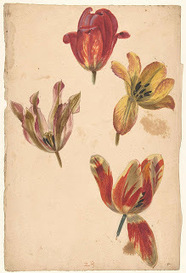 tulp-Collected works of Marlene - All Rijksstudio's - Rijksstudio - Rijksmuseum | Semantic Gnosis Web | Scoop.it