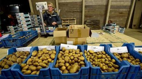 El cultivo de papas con agua salada es una apuesta contra el hambre - El Comercio | Comunicación, Conocimiento y Cultura del Agua | Scoop.it