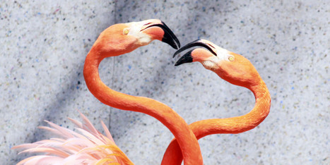 These Animals Make Your Valentine's Day Plans Look Lame | Weirdest Animal Behaviors | Scoop.it