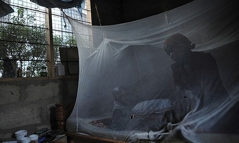 Malaria vaccine: Hopes rise for 2015 target after successful trials | Global Politics - Yemen | Scoop.it
