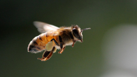 Honeybees reveal that evolution is stranger than you ever realized | Daily Magazine | Scoop.it