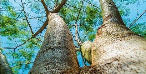 Resistencias ante el cambio climático - Actualidad Medio Ambiente   Actualidad forestal cerca de ti   Scoop.it