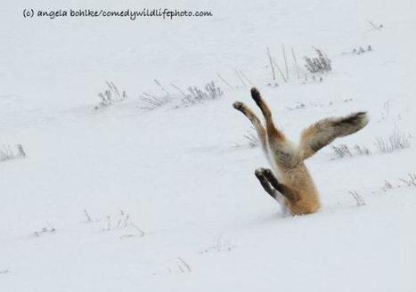 #Photographie : Voici les photographies animalières les plus drôles de l'année | Photographie, d'ailleurs! | Scoop.it