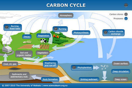 Carbon cycle | Sciencelearn Hub | Carbon Cycle | Scoop.it