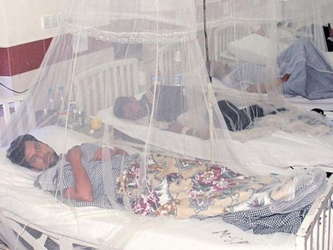 Unabated: 34 more diagnosed with dengue – The Express Tribune | Diseases | Scoop.it