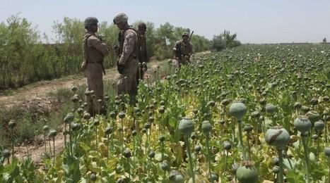 Afganistán: La invasión de EEUU y la OTAN ha disparado la producción de opio un 10% en 2016 | La R-Evolución de ARMAK | Scoop.it