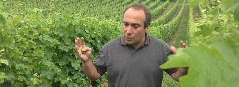 Bordeaux That Won't Break the Bank | Wine News & Features | Planet Bordeaux - The Heart & Soul of Bordeaux | Scoop.it