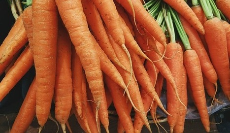 HealthFreedoms – What Can Happen to Your Body If you Eat Carrots Daily | Carrot | Scoop.it