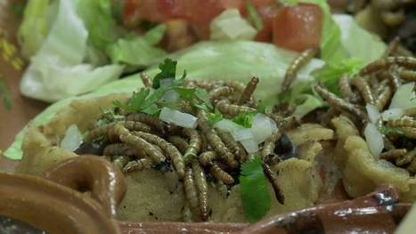 Les insectes, nourriture du futur ? -  25 janvier à 14h00 | Entomophagy: Edible Insects and the Future of Food | Scoop.it