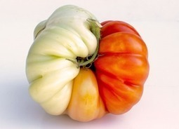 Ugly fruits and vegetables: why you have to learn to love them | Real Food Rebellion | Scoop.it