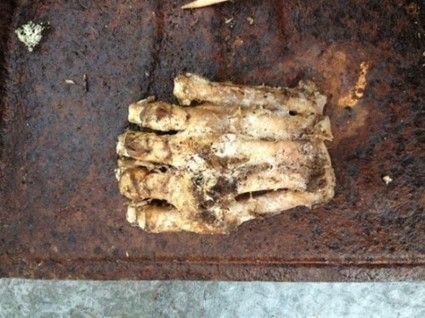 Decomposing BigFoot foot discovered ? | Strange days indeed... | Scoop.it
