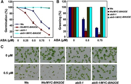 BRASSINOSTEROID INSENSITIVE2 Interacts with ABSCISIC ACID INSENSITIVE5 to Mediate the Antagonism of Brassinosteroids to Abscisic Acid during Seed Germination in Arabidopsis | Plant Biology Teaching Resources (Higher Education) | Scoop.it