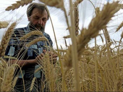 Michel, l'agriculteur qui conserve les sols   AC Agriculture de Conservation   Scoop.it