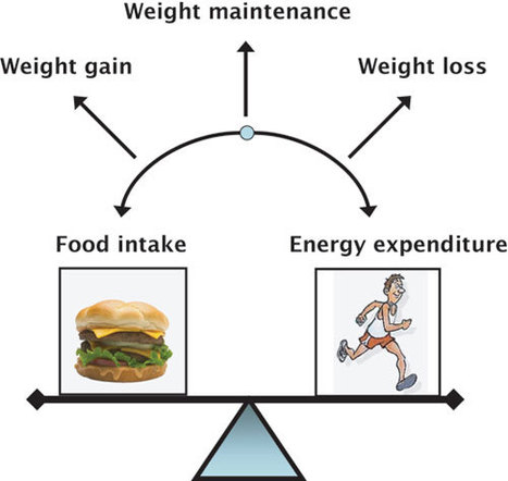 Diet Plan: The Secret Behind Weight Loss | Focus T25 Reviews | Scoop.it