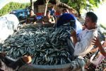 Could rebuilding global fisheries save hundreds of billions of dollars? | Water affairs | Scoop.it