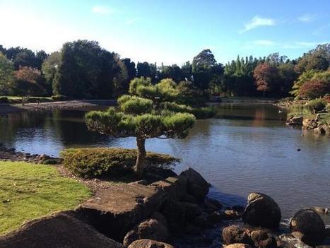 Tweet from @USQVC | My Japanese Garden | Scoop.it