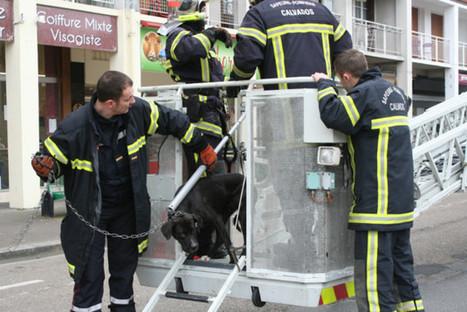 Lisieux La grande échelle pour sauver un chien | animaux | Scoop.it