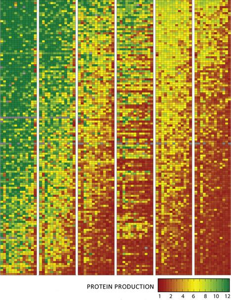A hidden genetic code for better designer genes | KurzweilAI | Longevity science | Scoop.it