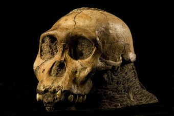 The Archaeology News Network: More on Ancient Human ancestors had unique diet   Pre-Modern Africa, the Middle East - and Beyond   Scoop.it