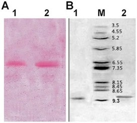 A Novel Method for Simultaneous Production of Two Ribosome-Inactivating Proteins, α-MMC and MAP30, from Momordica charantia L | PlantBioInnovation | Scoop.it