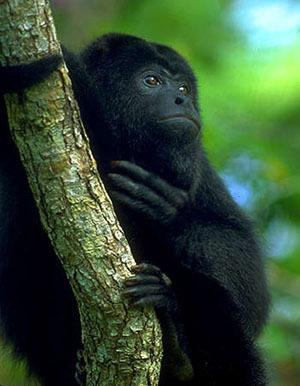 NGS Picks Belize as One of the Top 10 Animal Encounters | Belize in Social Media | Scoop.it