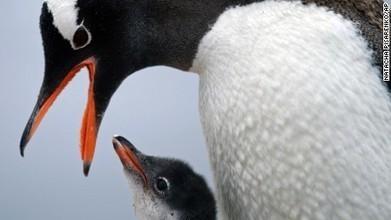 Remote Antarctica is red-hot - CNN | Antarctica | Scoop.it