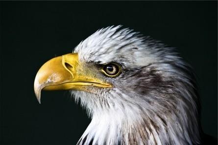 Pexels : des photos de qualité, totalement libres | Domaine D2 - Etre responsable à l'ère du numérique. | Scoop.it