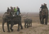 Kaziranga tour package presents security and relaxation | Vacation packages for many budgets | Scoop.it