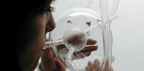 Projeto usa abelhas para detectar doenças como o câncer | Meu Acre, Ciências, Brasil, Artes e Borboletas | Scoop.it