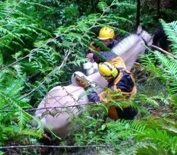Say Neigh: Rescuers try to save horse trapped in 40-foot ravine - Q13 FOX | Horses | Scoop.it
