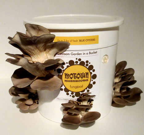 Looks like this 'mushrooms in a holey bucket' idea is catching on... | For the Love of Planet Earth | Scoop.it