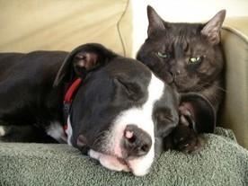 Flower Essences for Animals | Natural Pet Care | Scoop.it