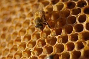 #idiotdujour : Une ruche s'ouvre dans un avion… où comment attraper le bourdon à 10 000 m d'altitude « Rendez-Vous En Terre Mal Connue   L'Idiot Du Jour   Scoop.it