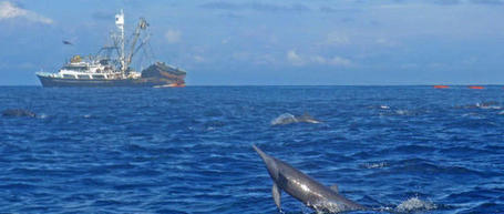 Dolphin protection, tuna catch in conflict for U.S., Mexico / News Briefs / More news / Costa Rica Newspaper, The Tico Times | Dolphins | Scoop.it