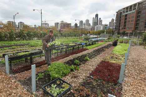 Chicago Is Not Messing Around When It Comes to Urban Farming | Vertical Farm - Food Factory | Scoop.it