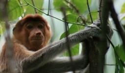 Le Parc National de Bako : le meilleur parc naturel de Malaisie. - Holiday Backpack   Voyager différemment   Scoop.it