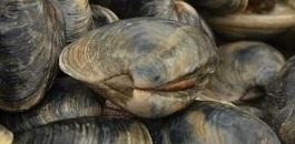 Aquaculture Sales Workshop | Aquaculture Directory | Aqua-tnet | Scoop.it