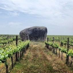 Guest Blogger – Jameson Fink on Portuguese grape varieties Notes ...   Wired Wines of Alentejo   Scoop.it