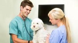 Le chien de pure race se porte bien | News Assurances | CaniCatNews-actualité | Scoop.it