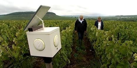 Les vignes de Champagne soignés par la musique | Le Vin et + encore | Scoop.it
