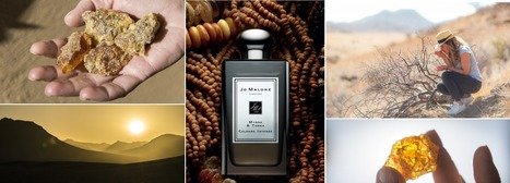 Jo Malone Myrrh & Tonka Cologne Intense. | MANE on the web | Scoop.it