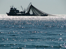 Plenty of Fish in the Sea?   Agricultural Biodiversity   Scoop.it