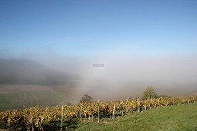 Une cellule de soutien pour le vignoble bergeracois | Agriculture en Dordogne | Scoop.it