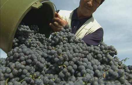 Le vin chinois remporte ses premières médailles - Aujourd'hui le Monde | Vins et Vignerons | Scoop.it