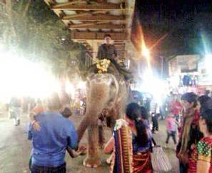 Despite ban, elephant found begging near Dahisar station - Mid Day | Practice | Scoop.it