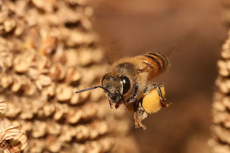 Bee-Inspired Algorithm Helps Delivery Companies Plan The Most Efficient Route | Biomimicry | Scoop.it
